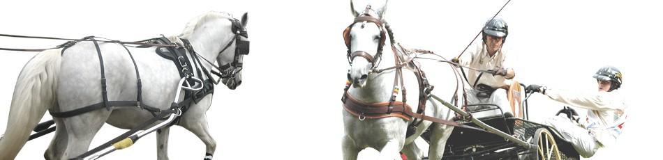 Attelage - grossiste équitation