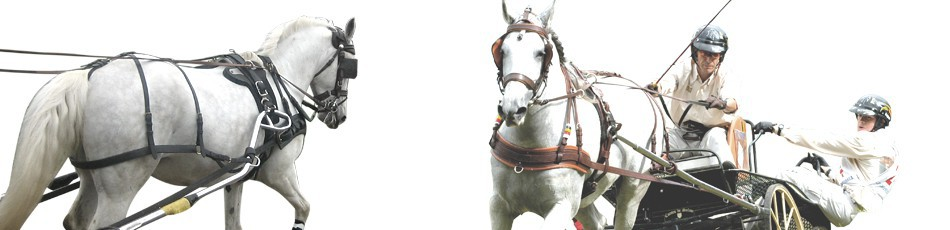 Carriage - horse riding wholesaler