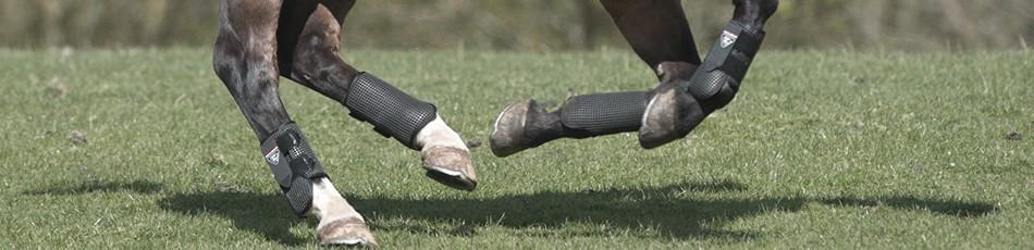 Protections - grossiste équitation